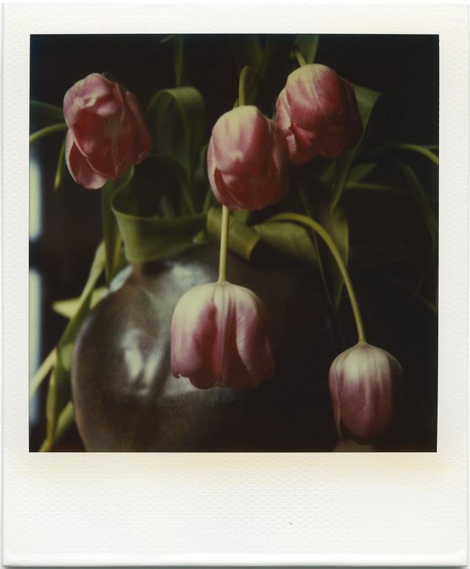 sans titre (tulips)